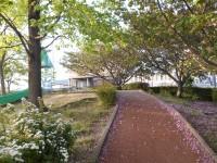 八重桜の花びらが散り遊歩道が桜花びらロードに♪